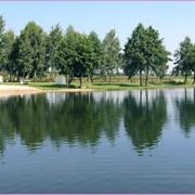 База отдыха «Срибница» – отдых на шацких озерах фото