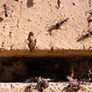 Борьба с мурашами фото