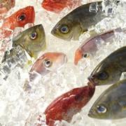 Заморозка и хранение рыбы фото