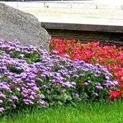 Устройство цветников и клумб №3 фото