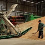 Заготовка, сушка, хранение семенного зерна. фото