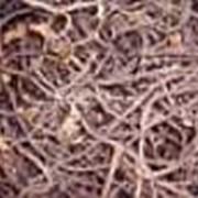 Орляк папоротник деликатесный сушенный фото