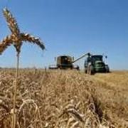 Выращивание зерновых и технических культур фото