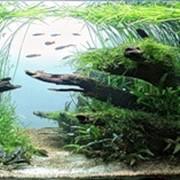 Подбор декораций для аквариумов Киев, Киевская область фото