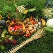 Микроудобрение универсальное для полевых и овощных культур фото