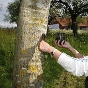 Лечение деревьев фото