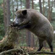 Охота в Беларуси фото