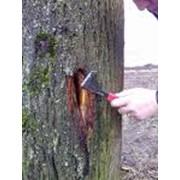 Лечение деревьев и кустарников фото
