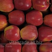 Яблоки Глостер (Gloster) фото
