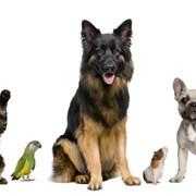 Перевозка домашних животных Могилев фото