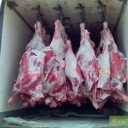 реализуем котлетное мясо (говядина,свинина) фото