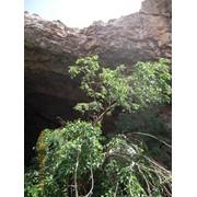 Автобусно-пешеходная экскурсия в пещеру АК-МЕЧЕТЬ фото