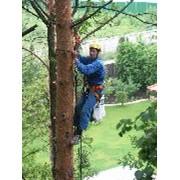 Обрезка веток деревьев фото