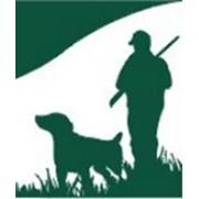 Натаска собак охотинчьих пород фото