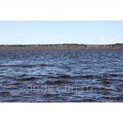 Берег, 1-я линия. Лемболовского озера - 24 сотки. фото