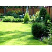 Посев и уход газонов стрижка елок ландшафтный дизайн. фото