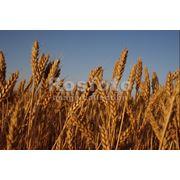 Страхование рисков аграрного товаропроизводителя фото