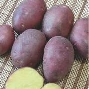 Картофель АМОРОЗА фото