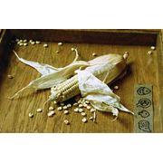 Сушка кукурузы фото