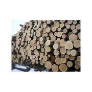 Лес круглый 6-8 м сосна и лиственные породы фото