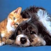 Ветеринарная помощь фото