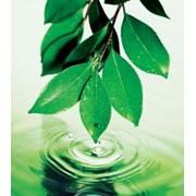 Расчет платы за негативное воздействие на окружающую среду (НВОС) фото