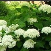 Высадка однолетних цветов. фото