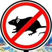 Крысиная смерть (200г/10кг) фото