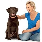 Терапевтическое лечение собак фото