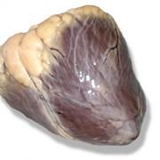 Сердце говяжье фото