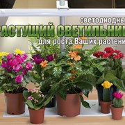 Фитолампа Здоровья Клад 16 Вт. фото