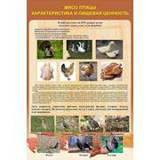 Плакаты по обработке птицы фото