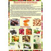 Плакаты по механической обработке овощей фото