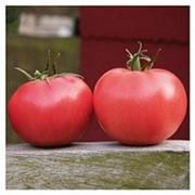 Семена томата (помидора) Афен F1 8 шт. фото