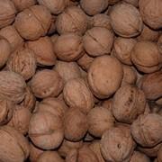 Продажа очищенного ореха грецкого на экспорт фото