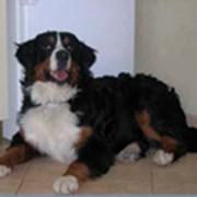 Ветеринарные услуги, Вакцинация, Чипирование животных, фото