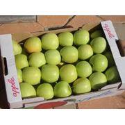 Яблоки Грени смит фото