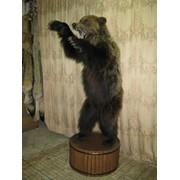 Чучело медведя. фото