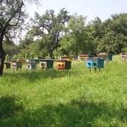 4-х рамочный пчелопакет Закарпатье, Украина фото