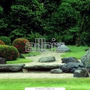 Посадка деревьев и кустарников в Астане фото