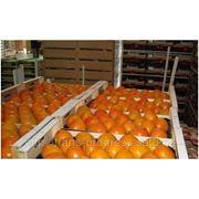 Перевозка фруктов и овощей с режимом с Алматы в Россию фото