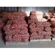 Перевозка овощей с режимом с Алматы в Россию фото
