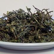 Очанка лекарственная (трава) фото