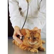Послеоперайионный уход, наблюдение животных у ветеринара фото