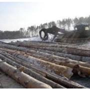 Сортиментная лесозаготовка Остерское лесное хозяйство, ДП фото