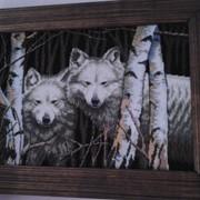 Вовки фото
