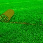 Реставрация газонов в Молдове фото