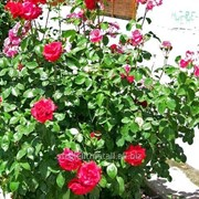 Устройство цветников и клумб №22 фото