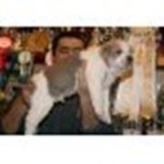 Продаются элитные щенки среднеазиатской овчарки - алабай туркменский волкодав. фото