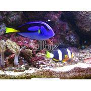 Рыбки аквариумные морские фото
